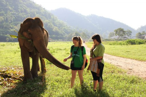 Loop Abroad Vet Students with Elephant