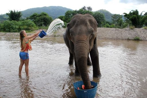 Loop Abroad student bathing elephant