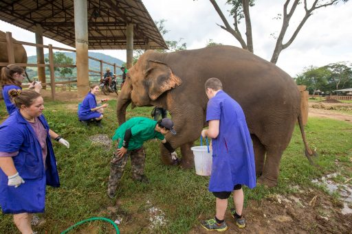 Elephant and vet students