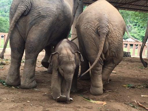 Elephants and Baby Elephant
