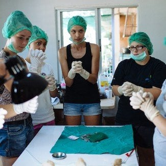 Loop Abroad Veterinary Students in Surgery