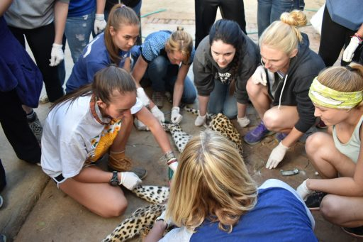 vet-students-cheetah