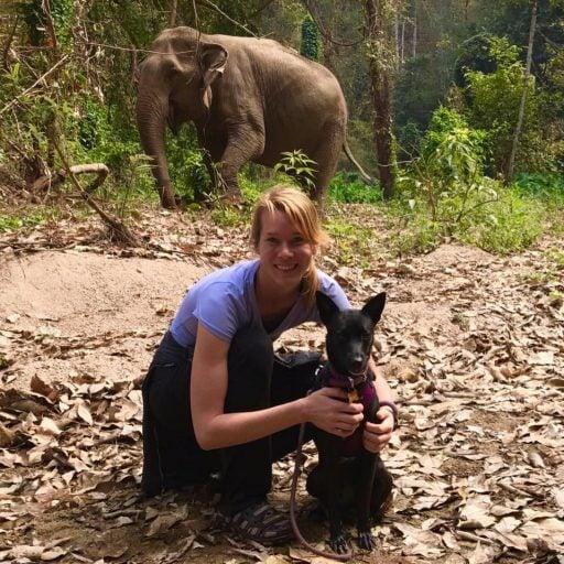 girl elephant dog