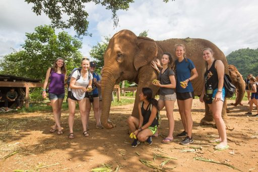 Elephant and College Vet Students