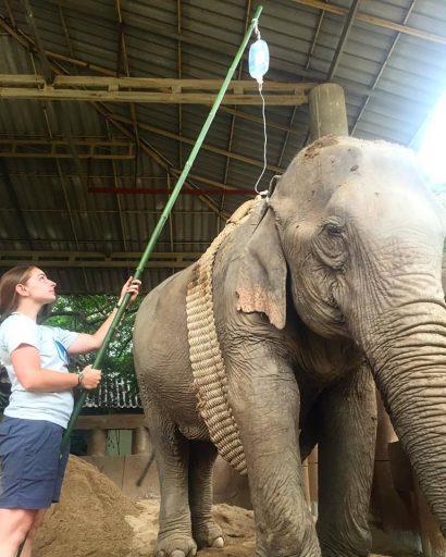 Elephant Vet Student drip